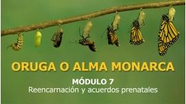 ORUGA O ALMA MONARCA - MÓDULO 7 - Reencarnación y Acuerdos Prenatales
