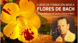 Formación Básica en FLORES DE BACH por José Salmerón